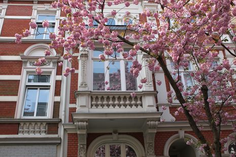 Facade with cherry blossoms